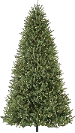 Memorial tree Program Option: Evergreen - Choose: White Pine, Norway Spruce or Southern Magnolia